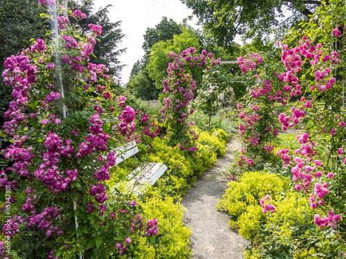 Cadres-photo bureau Jardin Rosengarten