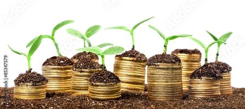 Fototapeta Investment, accounts, savings. obraz