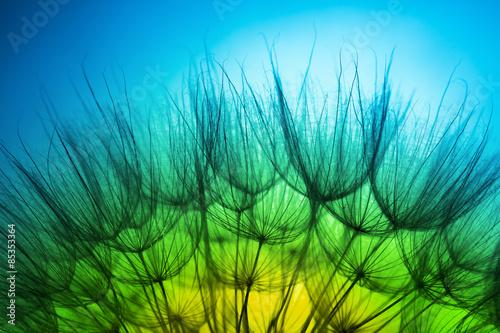 close up of dandelion #85353364