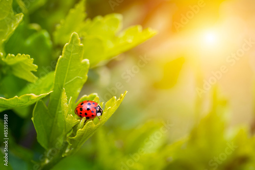 Photo  Ladybird in garden, close up