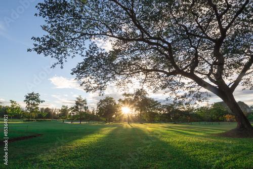 Fotografie, Obraz  Sunrise at greensward