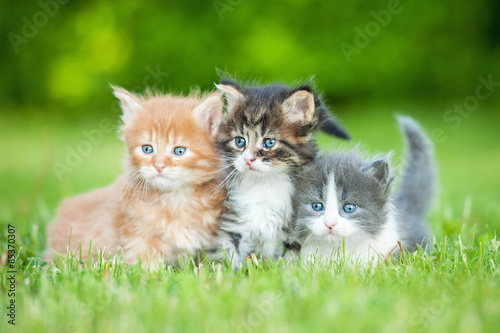 Photo Three little kittens sitting on the lawn in summer