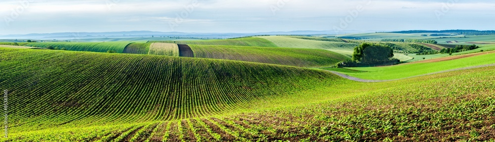 Fototapety, obrazy: Moravian rolling landscape with trees