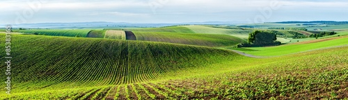 Wall Murals Village Moravian rolling landscape with trees