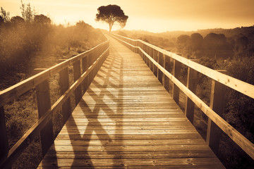 landscape of a wooden path with a tree at sunset