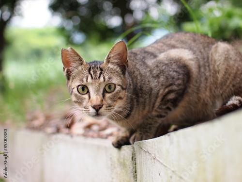 Foto  公園の野良猫
