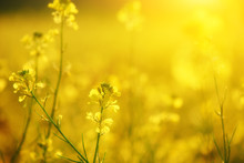 Natural Floral Background, Yellow Wildflowers