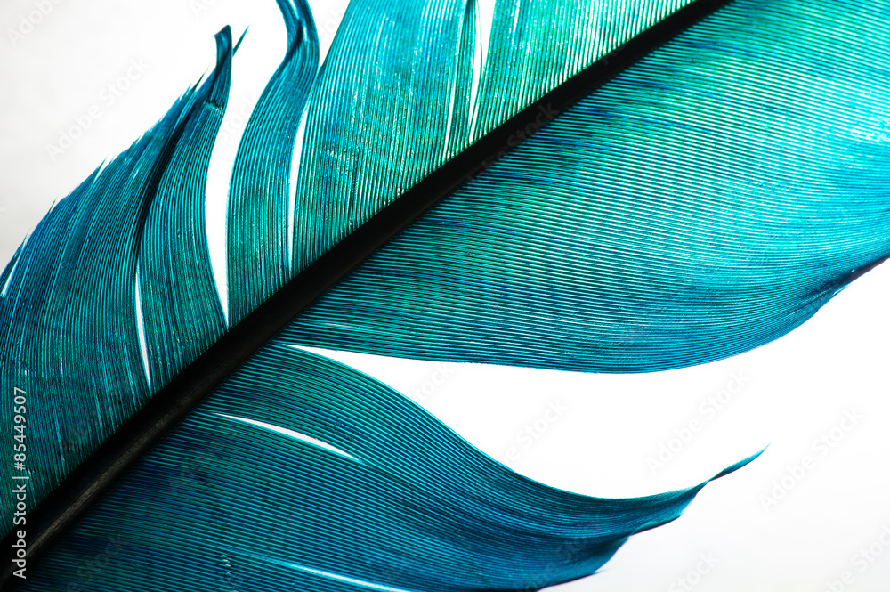 Fototapety, obrazy: turquoise feather of an angel, isolated background