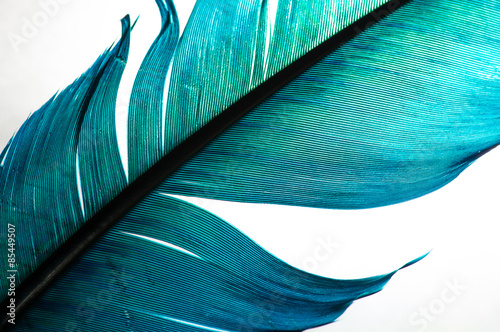 Papiers peints Macro photographie turquoise feather of an angel, isolated background