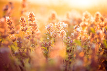 Wild Meadow Flowers At Summer Sunset