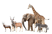 Giraffe, Elephant, Zebra, Blesbok Antelopes  And Kudu