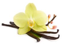 Vanilla Sticks And Yellow Orchids