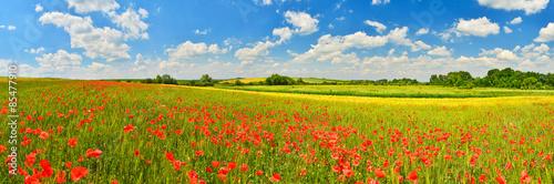 Foto op Plexiglas Weide, Moeras Poppy field
