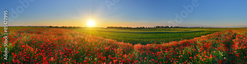 Tuinposter Panoramafoto s Panorama of poppy field in sunrise countryside