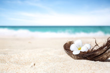 Coconut Shell On The Sand Of A Beautiful Beach