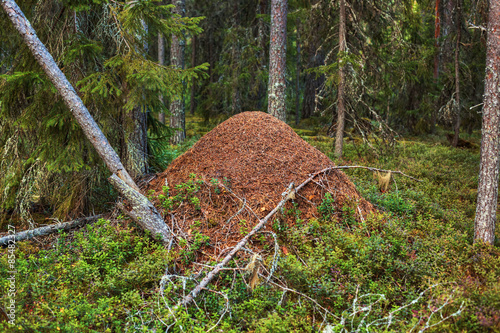 Big anthill Canvas Print