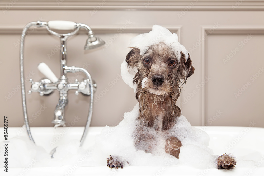 Fényképezés  Funny Dog Taking Bubble Bath
