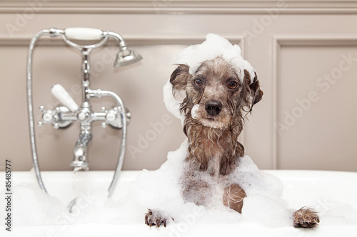 Fotografiet  Funny Dog Taking Bubble Bath