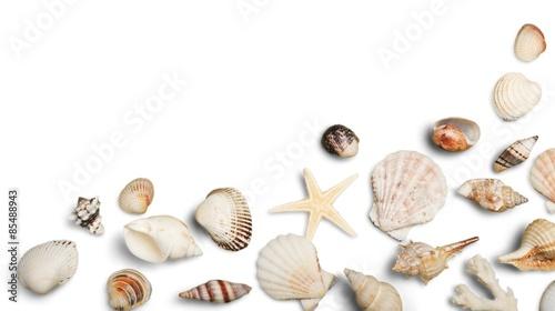 Fototapeta Shell, Beach, Sand. obraz