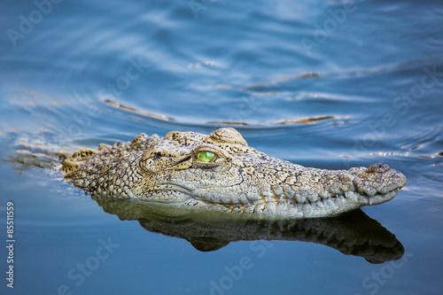 Foto op Plexiglas Krokodil Wunderschönes Krokodil