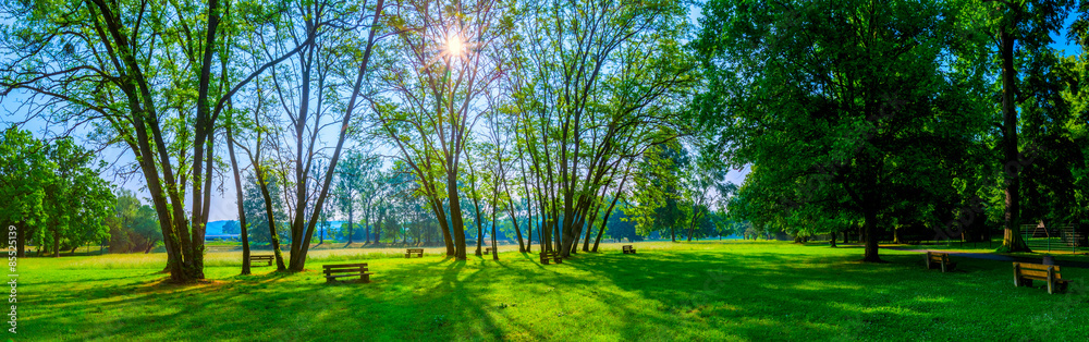 Fototapeta sunny summer park with trees and green grass