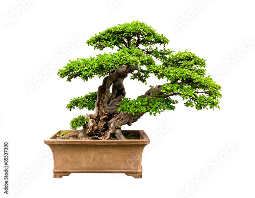 In de dag Bonsai Bonsai