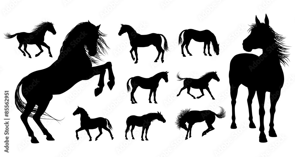 Fototapety, obrazy: Horse Silhouettes