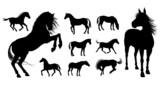 Fototapeta Konie - Horse Silhouettes