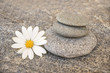 Stack of stone pebbles and a daisy