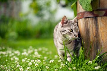 Obraz Kot