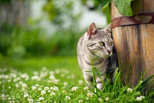 Poster Kat Kot