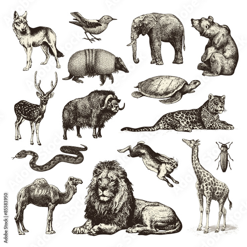 Photo  wild animals - collection of wildlife illustrations