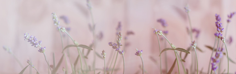 Lavendel, Bokeh