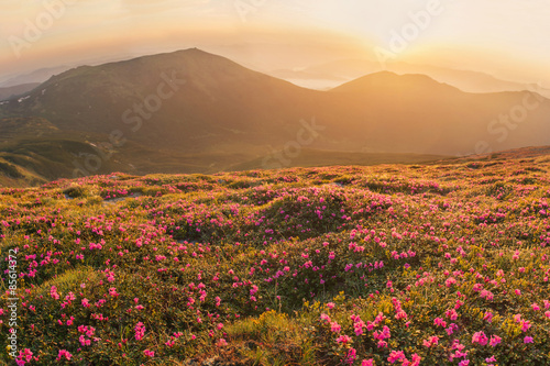 Fotobehang Bergen Beautiful mountain landscape with blossoming rhododendron flower