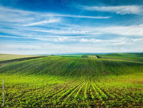 Cadres-photo bureau Sauvage Rolling fields of Moravia