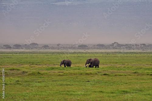 Aluminium Prints Bison Elephant
