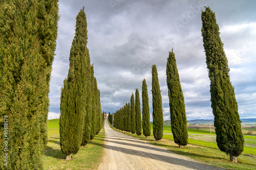 Foto  Idyllic Tuscan landscape with cypress alley near Pienza, Val d'Orcia, Italy