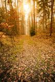 Droga przez mglisty las jesienią