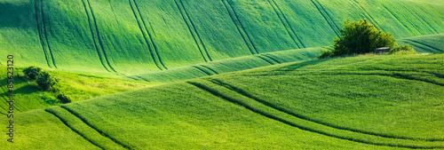 In de dag Pistache Moravian rolling landscape