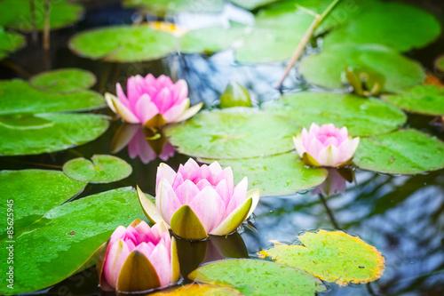 Keuken foto achterwand Waterlelies Seerosen im Gartenteich