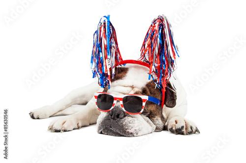 Fotografia  Funny Fourth of July Dog