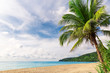 Tropical white sand with palm tree on the beach Phuket. Thailand