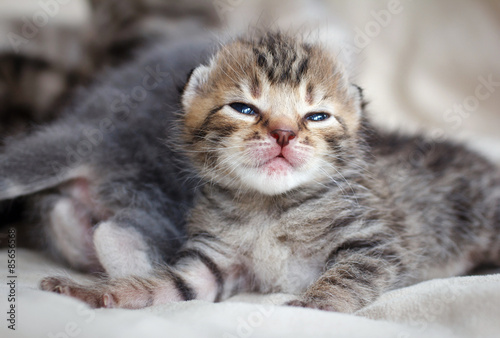 Fototapety, obrazy: children kittens