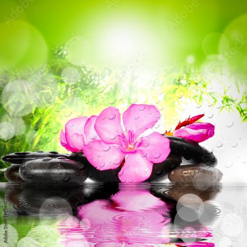 koncepcja-spa-kwiat-i-kamienie