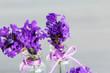 lila Lavendel in Gläschen