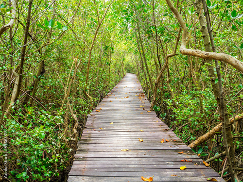Fototapety, obrazy: stairway leading to the tropical mangrove in the sea shore