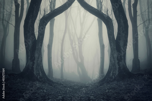 Photo  magical gate in mysterious forest with fog