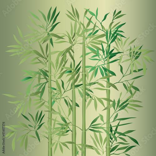 zielone-drzewko-bambusowe
