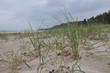 Wildromantischer Darsser Weststrand, Darß, Nationalpark Vorpomme