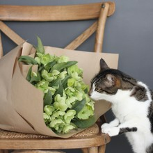 Cat Sniffing Bunch Of Flowers Lying On A Chair